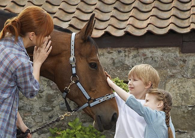Komm zum Pferd – am 18. Mai 2014 lädt Schleswig-Holstein zum Tag der offenen Stalltür