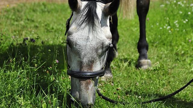Was dürfen Pferde nicht fressen ?