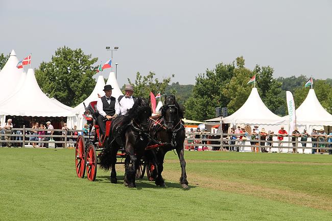 CHIO Aachen 2014: Barockpferde beim Show- und Zuchttag