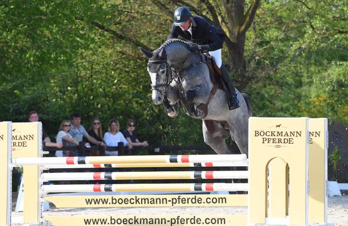 Hengstvorführung der Böckmann Pferde GmbH