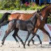 Global Jumping Foals begeistern in Berlin
