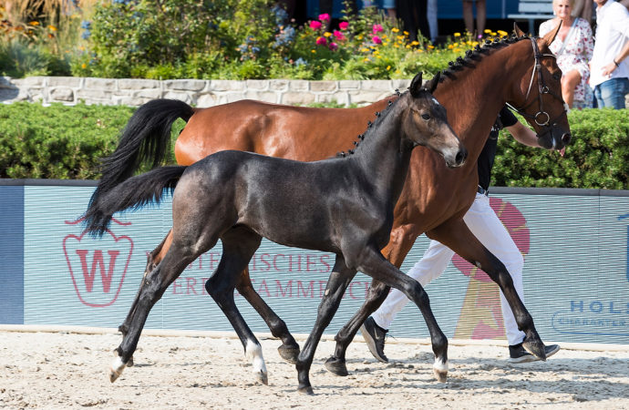Global Jumping Foals begeistern in Berlin